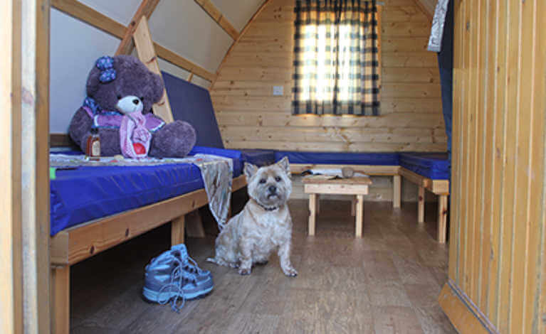 Dog inside Wigwam® Cabin