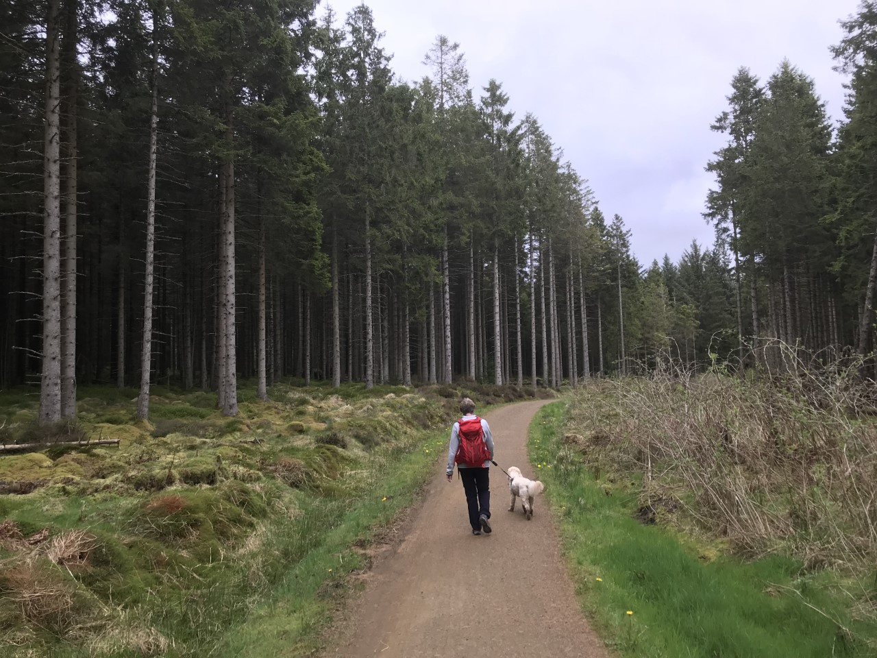 walks at Kielder Water and Forest Park